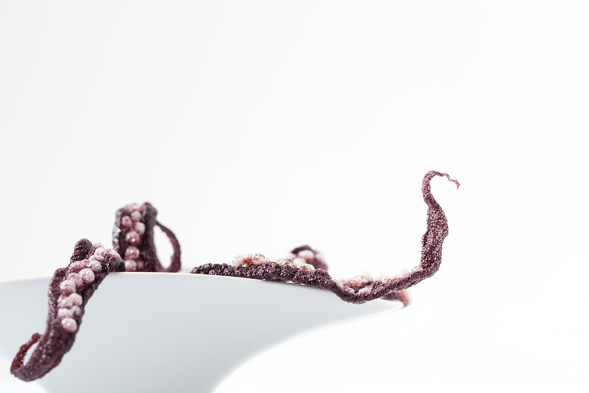 41° Octopus